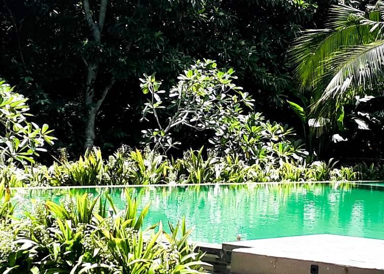 GreenGarden - Pool - Sri Lanka